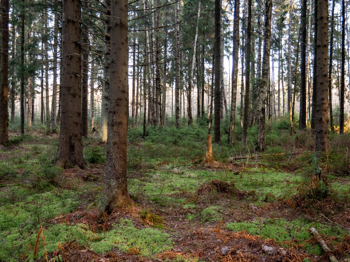 Umwelt: Blick direkt in einen Wald