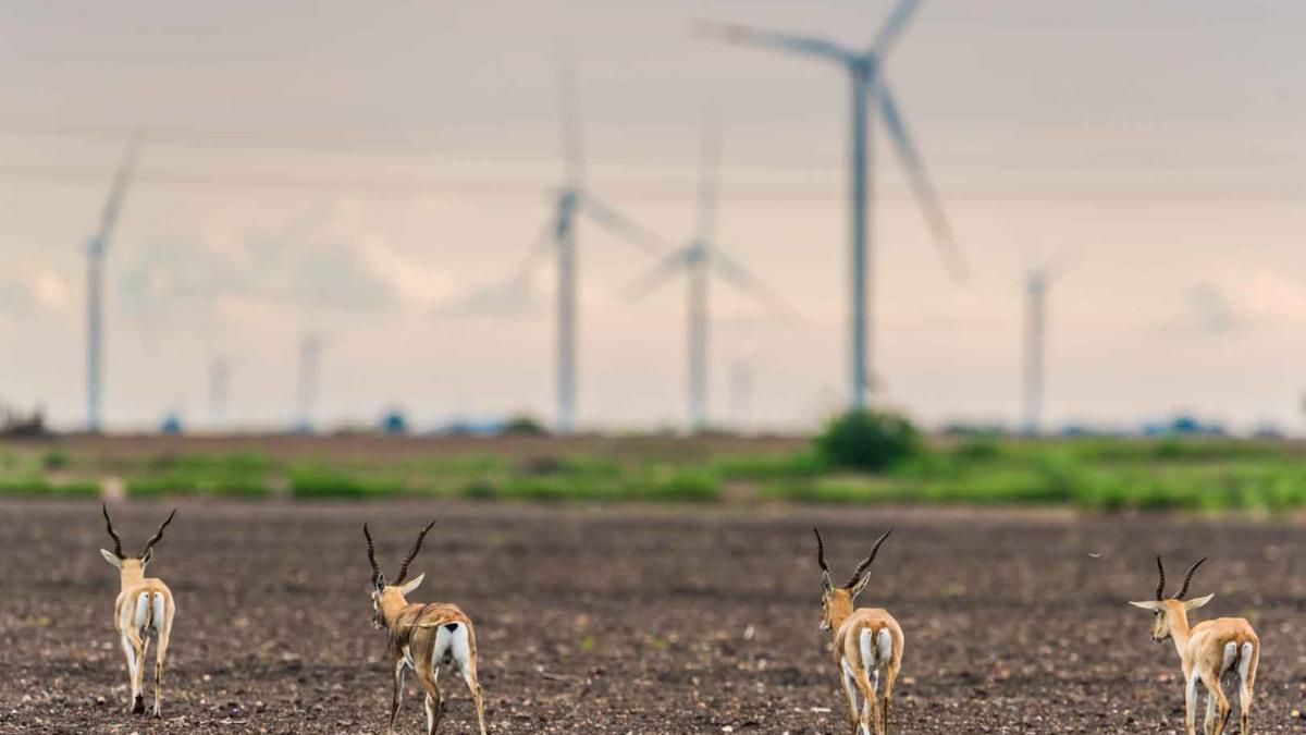 Klimaneutral drucken: unser Projekt in Satara